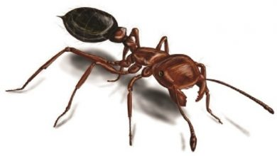 Photo of چگونه جای نیش مورچه آتشین را خوب کنیم